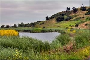 Coyote Hills Regional Park by Jill Clardy on flickr